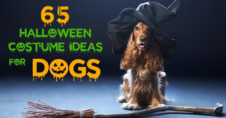 One of the most patently hilarious and cutest things ever is to dress your dog up in a costume. We love Halloween, and we always look for the best dog Halloween costumes to dress up together with our pets. Wasn't it scientifically proven that all canines look adorable in dog costumes? #halloween #dogs #party #dogcostume #costumes #pets