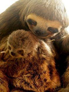Nascimento inesperado de preguiça emociona funcionários em Peruíbe