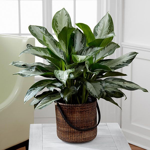 Pin on Indoor House Plants Flowers Pictures and Names
