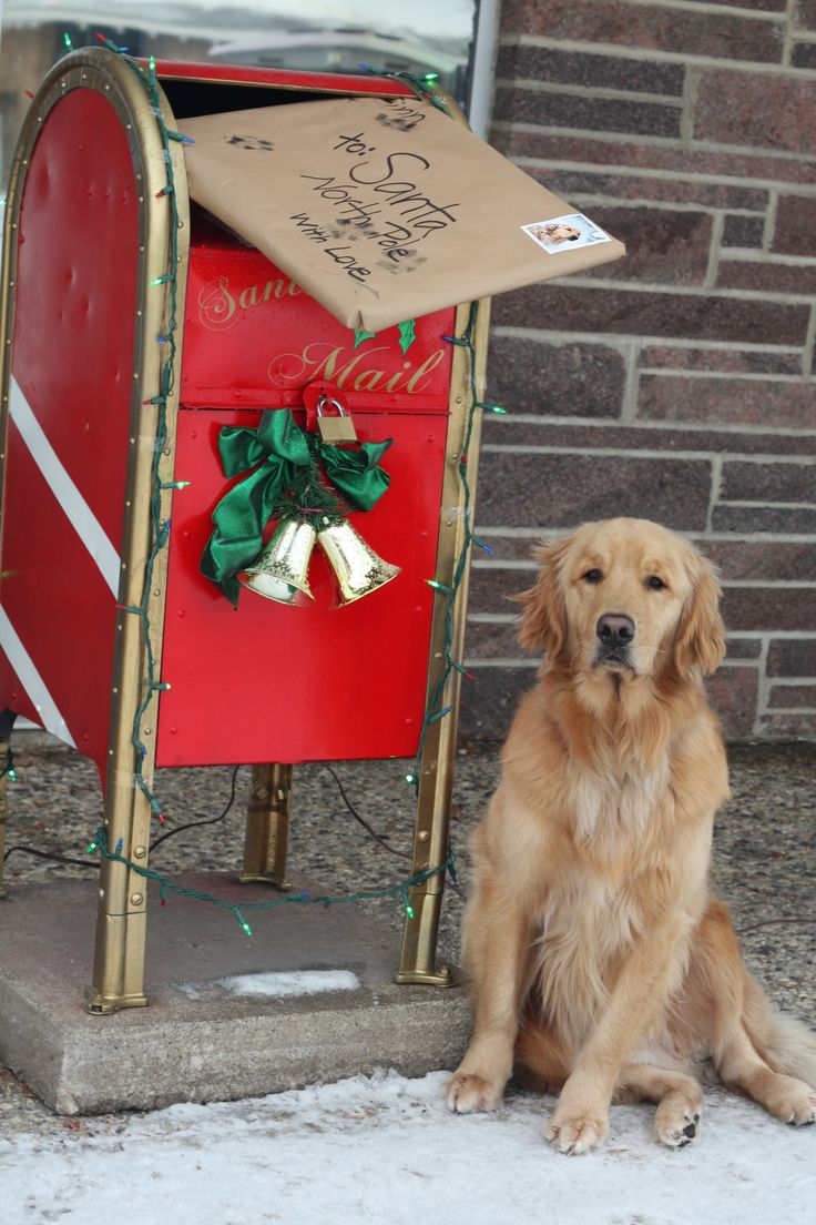 Precious...his letter asks for all his dog friends in shelters to be rescued