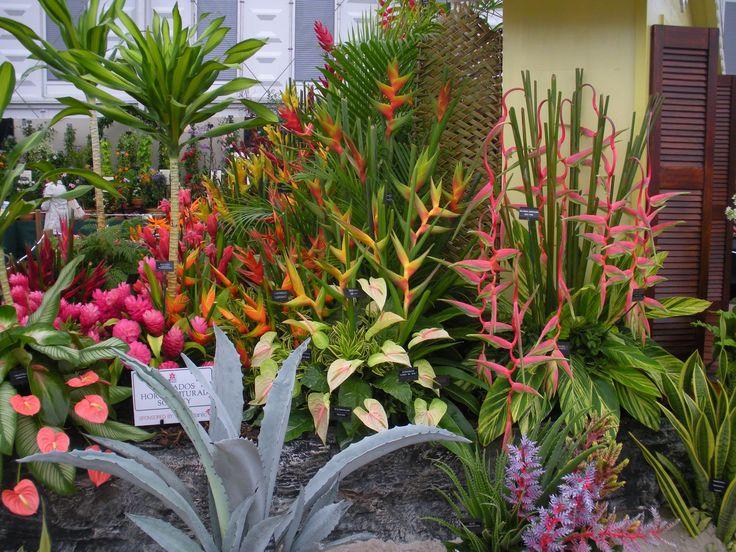 Die Besten 17 Bilder Zu Tropical Plants Auf Pinterest | Gärten ... Garten Ideen Tropisch Exotisch Bilder