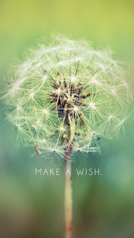 Make A Wish, Dandelion   free iPhone 6 wallpaper downloads