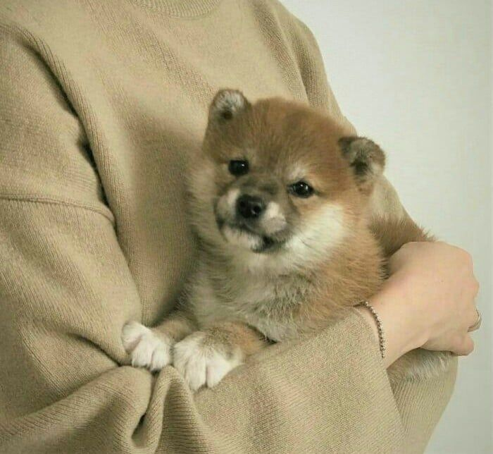 Puppy Cute Puppy Dog Animal Pets Baby Animals Cute Baby Animals Cute Animals