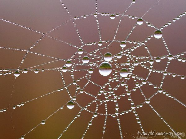 Mom, it's your webs and my drops all in one!