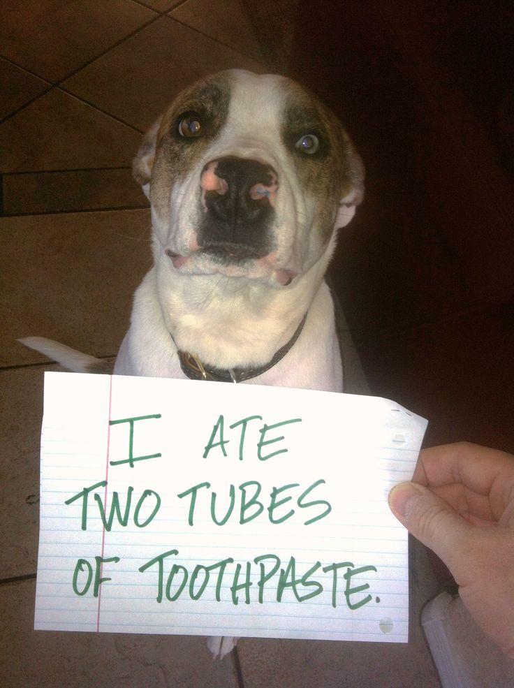 Bad Loki ~ Funny Dog Shaming  ~ WARNING: xylitol is extremely toxic to dogs (an ingredient in most tooth pastes)