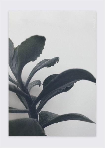 SUCCULENT PLANT No 1// Photoart, Cactus print, Botanic.