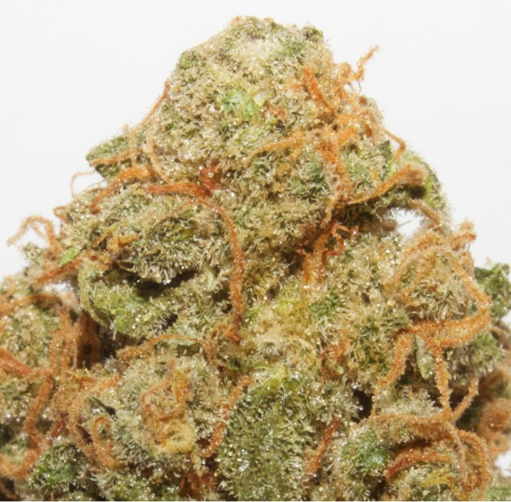 Bubblegummer Strain Review  A long standing and close relative of the legendary…