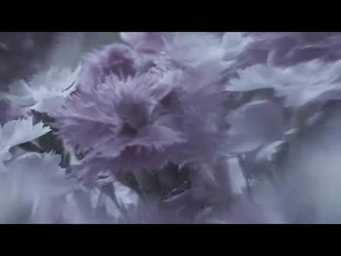 Время сжигать мосты (The Lightbulbs) Земфира - YouTube