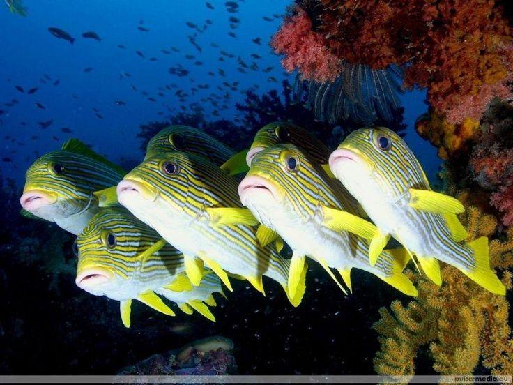 Peces de colores - wallpapers: http://wallpapic.es/oceano-y-mar/peces-de-colores/wallpaper-11381