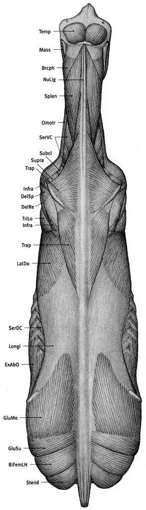 83 best Creature Design images on Pinterest | Animal anatomy ...