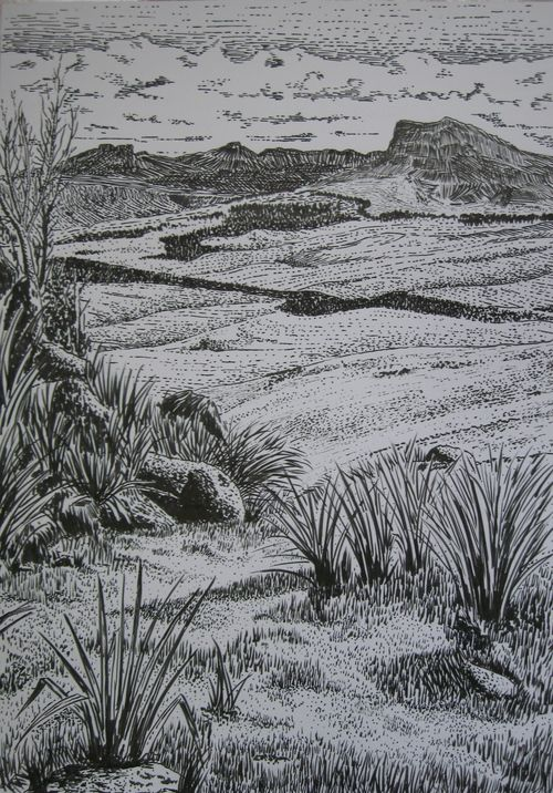 Contour Line Landscape Drawing : Best images about pen and ink wash on pinterest