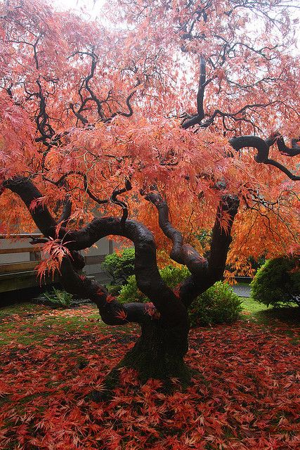 Autumn Portland Japanese Gardens Oregon Arbres Pinterest Gardens Beautiful And Autumn