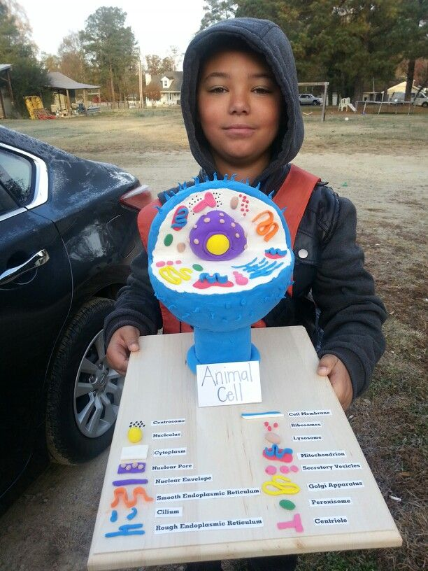 Animal cell | School projects | Pinterest | Animal, School ...