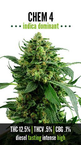 Chem 4   Repined By 5280mosli.com   Organic Cannabis College   Top Shelf Marijuana   High Quality Shatter