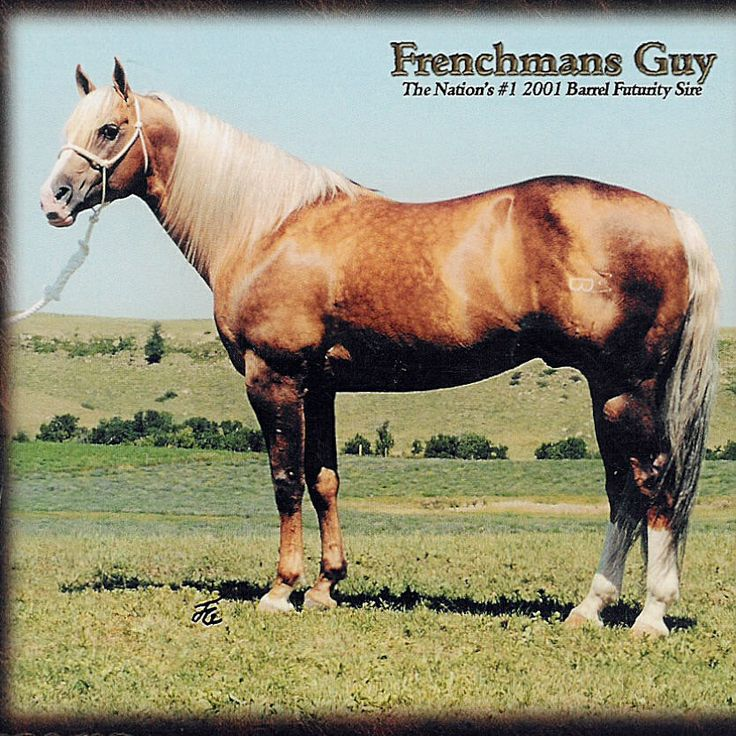 Frenchman's Guy, a true barrel horse stallion.i will have a baby from him one day and hopeing soon love this horse hes amazing! #barrelracing, #quarterhorse, #stallion