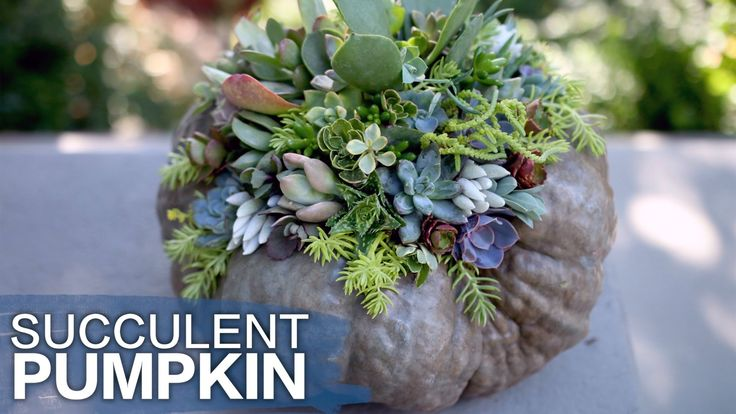 Succulent Topped Pumpkin (Or Squash) // Garden Answer