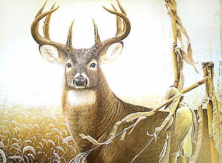 Cornfield Buck  - whitetail deer painting by Larry Zach