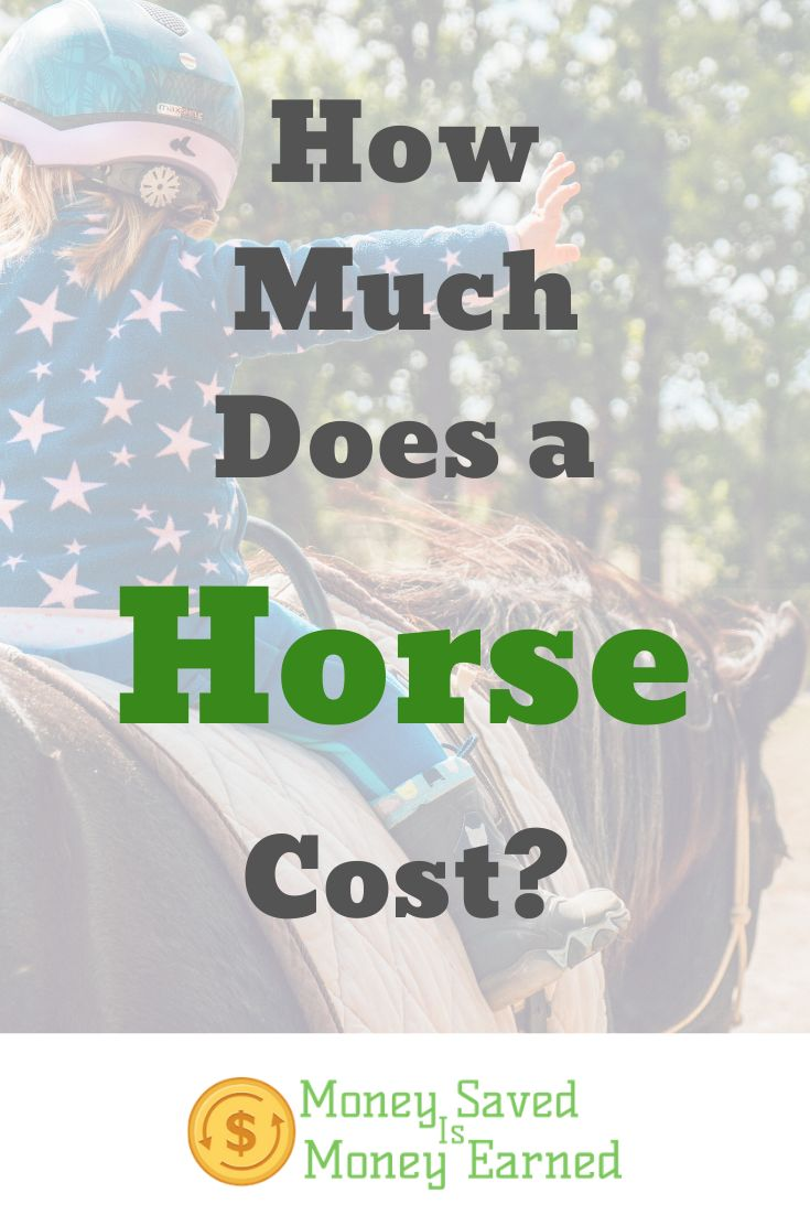 How much does a horse cost money saved is money earned