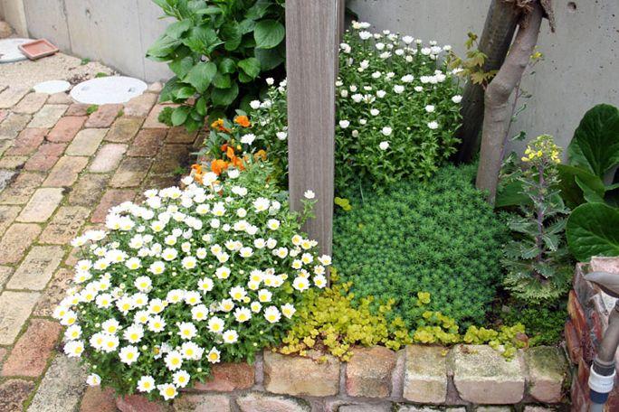 レンガ積み花壇 ガーデニング