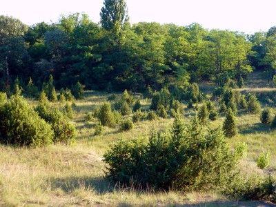 Csévharaszti ősborókás (Természetvédelmi terület) (Csévharaszt): Csévharaszt közigazgatási területe közel 50 km2. A 143 hektáros belterületet szinte teljesen erdő övezi. A 105 hektáros ősborókás, mely tölgyes, nyáras foltjaival, gyepjeivel, aljnövényzetével (pl. árvalányhaj, tartós szegfű) együtt kellemes látnivaló, 1939 óta természetvédelmi terület.