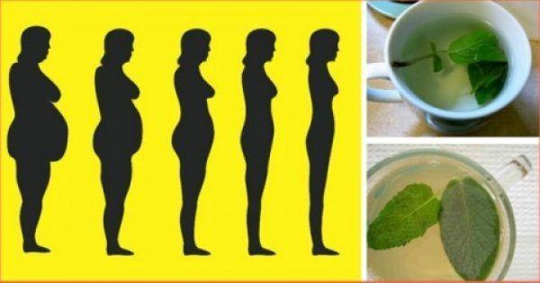 Τα καλύτερα βότανα για απώλεια βάρους, αποτοξίνωση και ενίσχυση του μεταβολισμού
