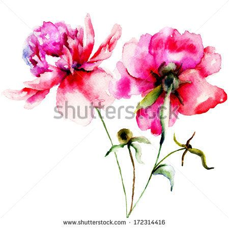 abstract watercolor peony - Google Search
