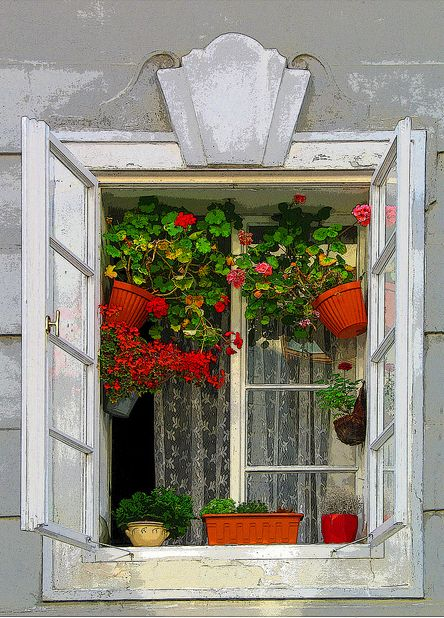 Window garden. Prague.