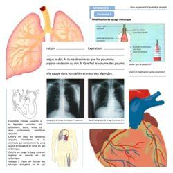 CM - Sciences - La Respiration et la Circulation - animation flash