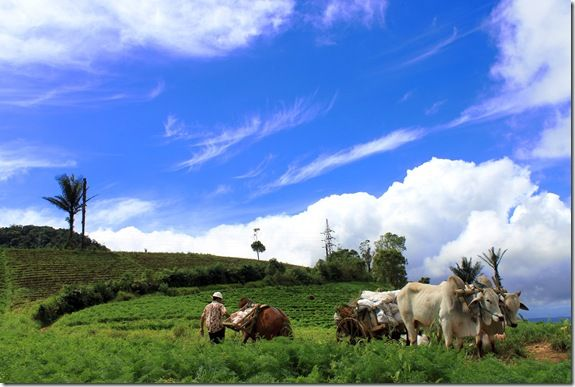 Agriculture Village - Rurukan