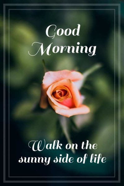 Good Morning. Walk on the sunny side of life.