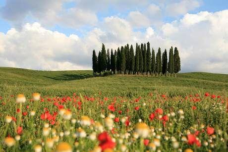 Cosa Vedere in Toscana:Musei,Posti da Vedere,Monumenti in Toscana