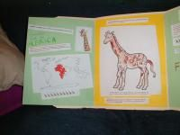 Fun facts about giraffes great for grassland habitat