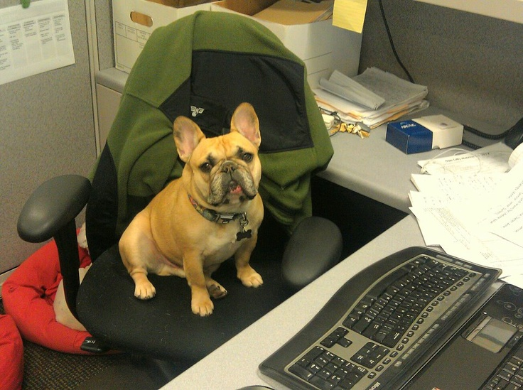 I need to stop posting pictures of French Bulldogs.