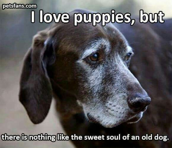 Senior Dogs are WONDERFUL TOO!! They're already trained and want to be loved!!! Adopt older dogs too!!!