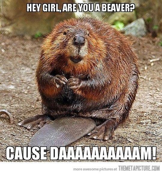 Beaver anal secretions