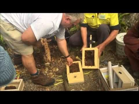 Australian Native Bee Hive 3