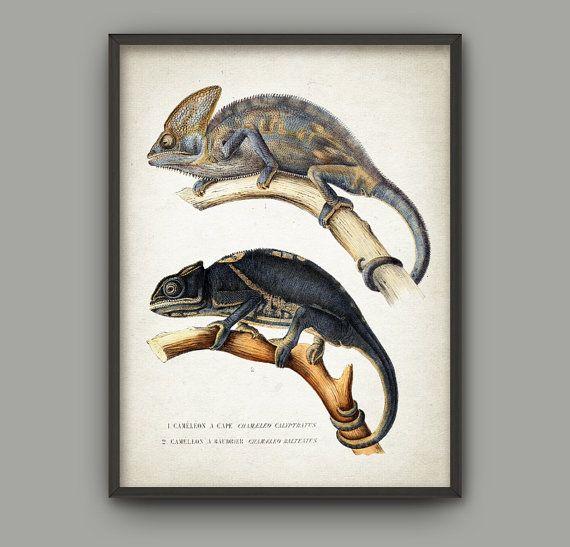 Hoi! Ik heb een geweldige listing op Etsy gevonden: https://www.etsy.com/nl/listing/264164703/chameleon-vintage-chameleon