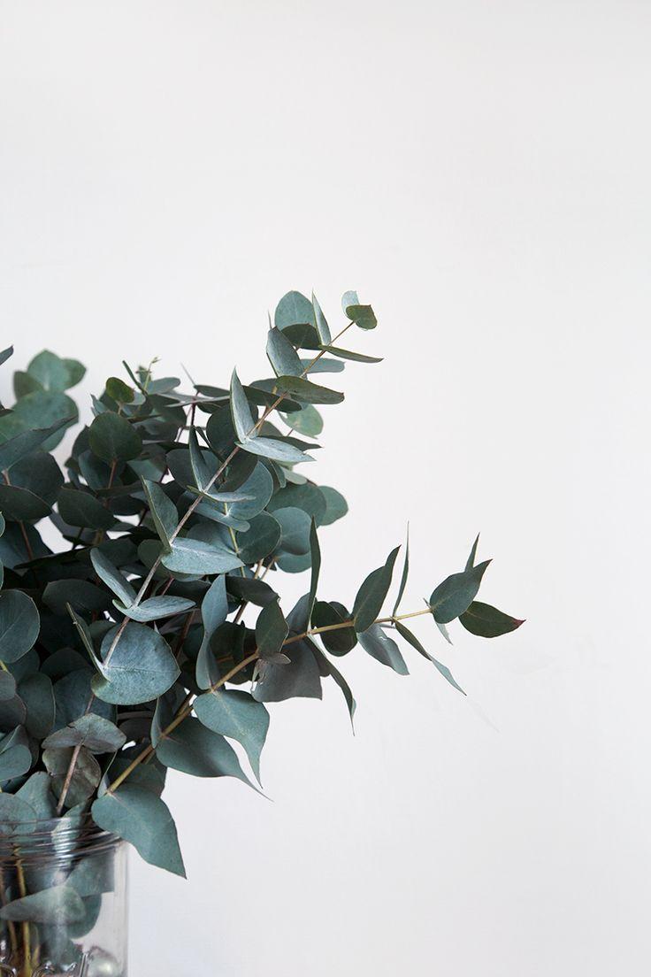 L'Eucalyptus – Notre green touch' de l'Hiver »