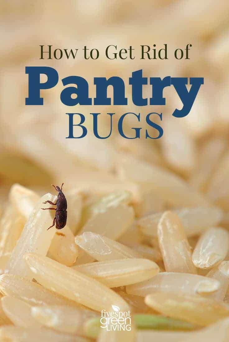 How To Get Rid Of Pantry Bugs With Images Pantry Bugs