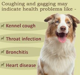 Dog Coughing and Gagging