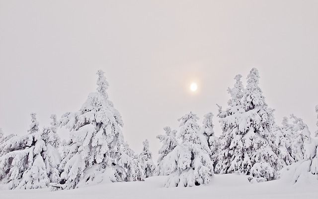 Winter Wonderland im Harz! Ist das nicht sehenswert? Die schönsten Ferienhäuser für Ihren Winterurlaub im Harz finden Sie unter www.premium-unterkunft.de/harz