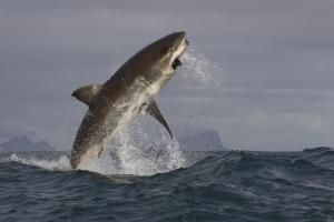 10 Facts About #Sharks