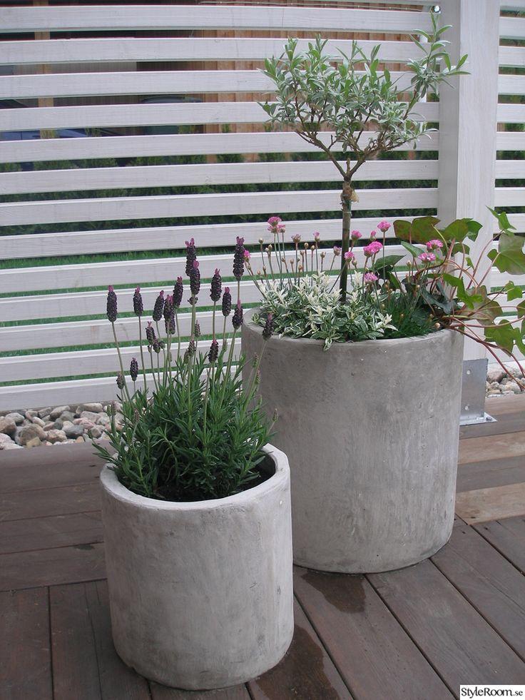 betongkrukor,blommor