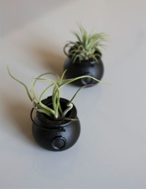 Elegant Halloween Wedding Idea. It's a cute wedding favor to grab on the way out or to be placed on the table at each place setting. Everyone loves air plants.