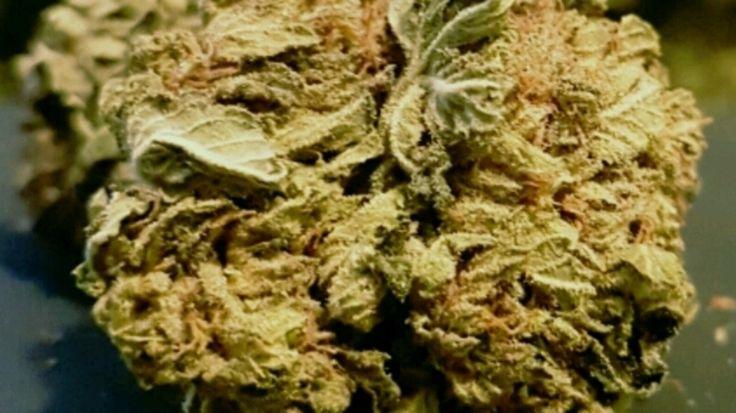 Medical marijuana discount coupons