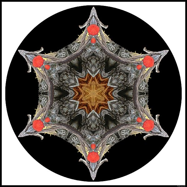 Lesotho Highlands by MSB Lane: The black, rich brown, silver and gold rocks of the Lesotho highlands form the basis of this kaleidoscope mandala, highlighted by the brilliant red of a blood lily.