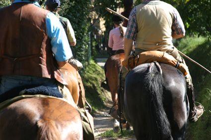 per ogni tipo di equitazione da quella western a quella tradizionale toscana... for all kind of equitation style, classical, western ...