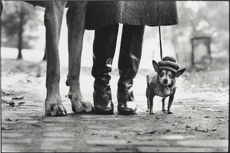 Elliott Erwitt, New York City, 1974.