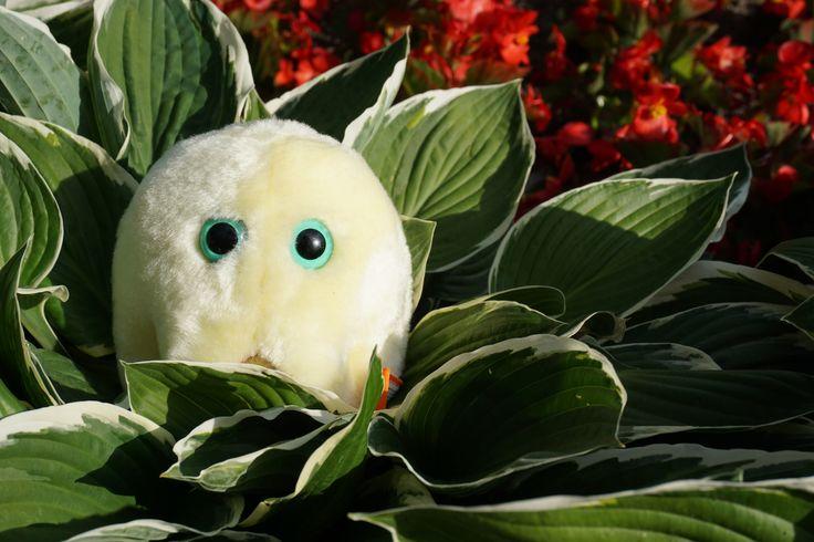 Nastała wiosna i rośliny zaczęły już pylić intensywnie. Pylenie roślin daje się mocno we znaki alergikom. Wiem, że niektóry z nas ciężko przeżyć ten okres, bo za oknem słońce, a my wcale się z tego nie cieszymy. Zebrałam dla Was w jedno miejsce przypomnienie wszystkich zasad ochrony samego siebie w tym trudnym okresie. http://www.zawszeokrokprzedastma.org/poradnik-przetrwania-pylenia-roslin/ #alergia #astma #pylenie #roztocza #atopowe