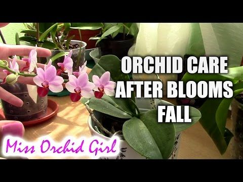 Orchid Care Trick : How to Save Your Potted Orchid From Dying - YouTube